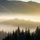 beautiful foggy scenery in autumn by mike-pellinni