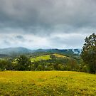 grassy rural meadow in mountains by mike-pellinni