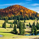 splendid autumn landscape on a bright day by mike-pellinni