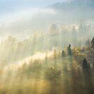 beautiful nature scene in fog by mike-pellinni