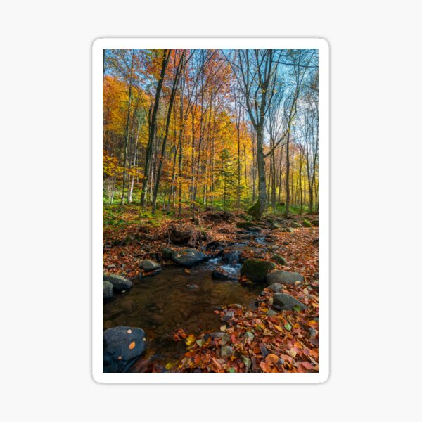 brook among stones and foliage in forest Sticker
