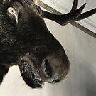 26.11.2011: Scary Moose Head by Petri Volanen