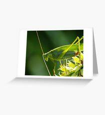 Grasshopper at sundown Greeting Card