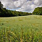 Poppy field - UK by Susana Weber