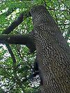 Rising Tree by Ryan Davison Crisp