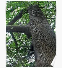 Rising Tree Poster