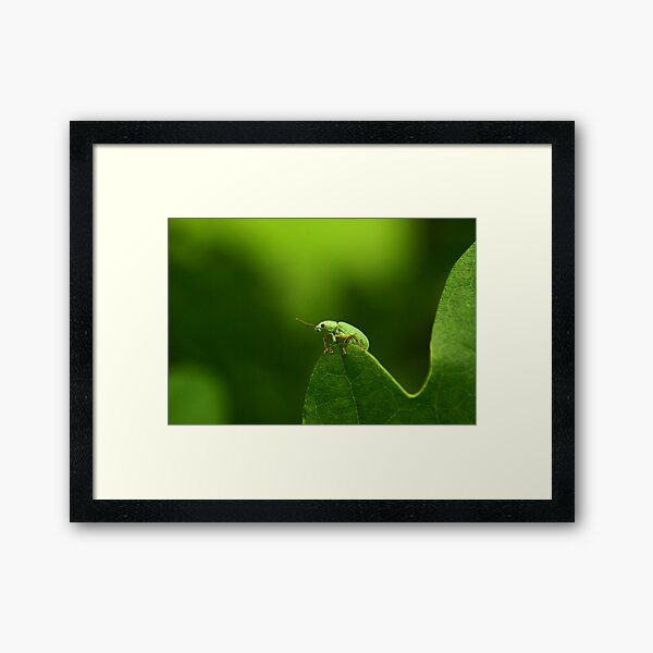 down to the hill Framed Art Print
