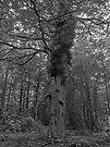 Eerie Chillingham Woods by Ryan Davison Crisp