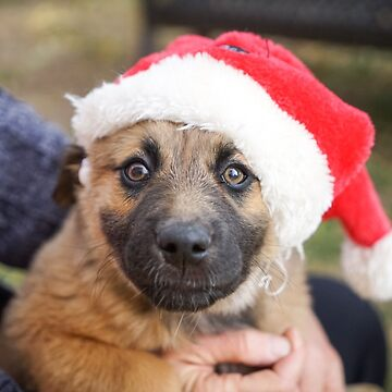 Puppy With Santa Claus Hat by Zehda