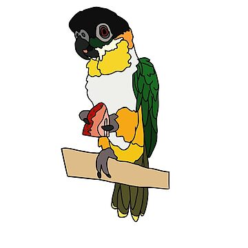 Black-Headed Caique by nolessjess