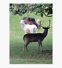 The White Stag Photographic Print