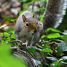 Autumn Grey Squirrel Photo Print by MGMasonCreative