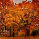 New England fall - Brookline, Massachusetts  by LudaNayvelt