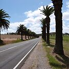 The 5klm Trail of Date Palms to Seppeltsfield Winery. Nuriootpa. by Rita Blom