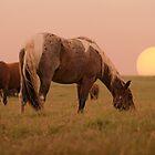 Wild Sunrise by Kristi Johnson
