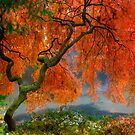 Japanese maple tree by LudaNayvelt