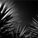 Sunrays by Kym Howard