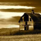 Busy Barn by Tim Wright