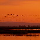 Sand cranes returning by the57man