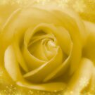Golden Rose And White Snow by hurmerinta