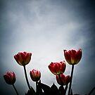 Tulips by Hilary Walker