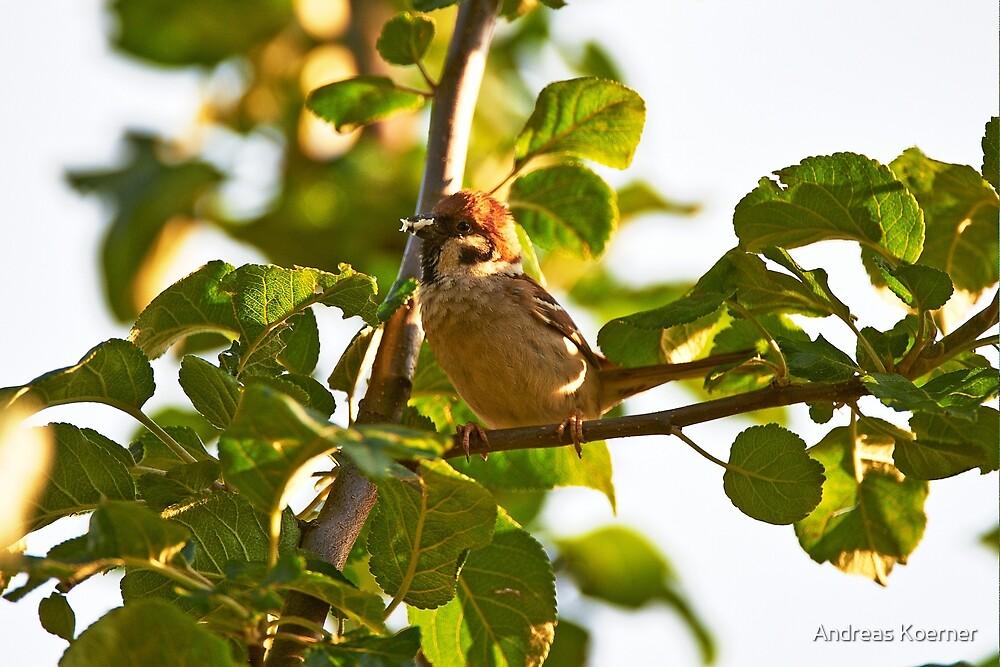 """Eurasian Tree Sparrow"" by Andreas Koerner"