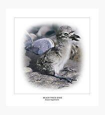 BEACH THICK-KNEE #4 Photographic Print