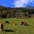 Pasture in Switzerland by annalisa bianchetti