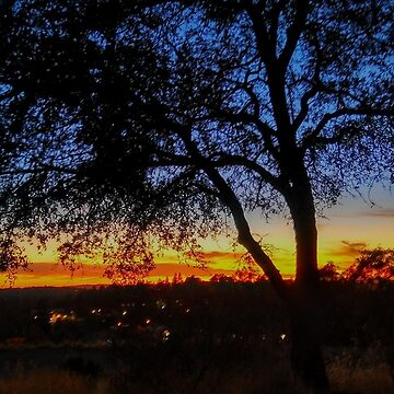 Sunset Tree by lyoung403b