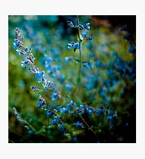 Beauty is the entropy of a starlit sky Photographic Print