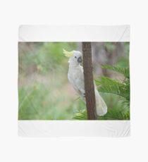 A hiding Sulphur-Crested Cockatoo Scarf