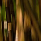 Bamboo impressions #02 by LouD