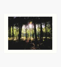 Coldharbour Forest in Surrey Art Print