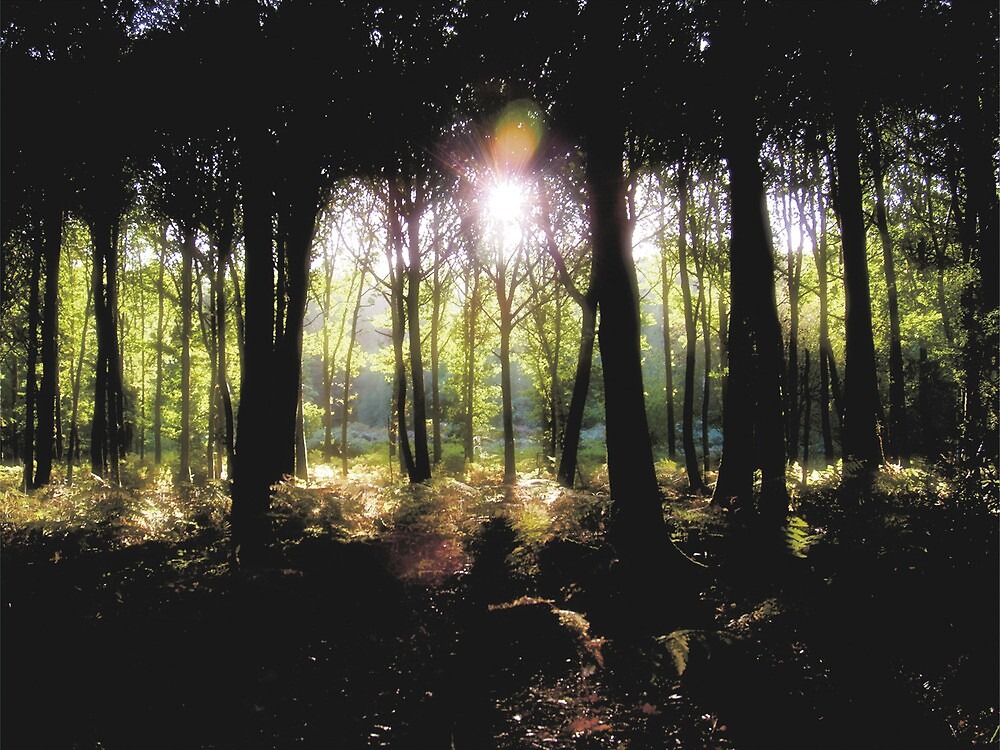 Coldharbour Forest in Surrey by Eyeswide