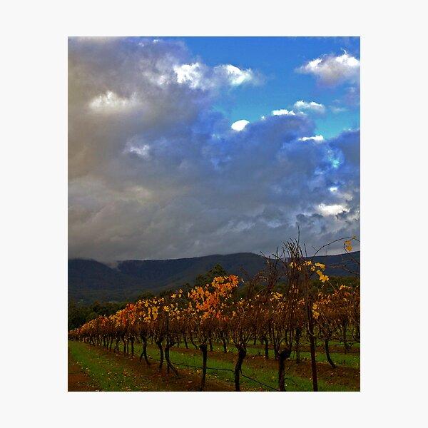 Yarra Valley Vineyard Photographic Print