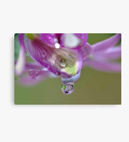 Every drops counts Canvas Print