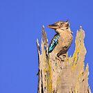 Birds of Queensland by David de Groot