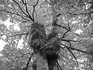 Portrait of a Tree by Ryan Davison Crisp