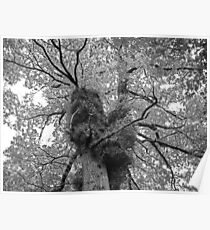 Portrait of a Tree Poster