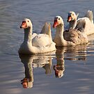Keeping your Geese in a Row by David de Groot