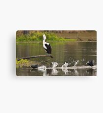 Pelican watching the passing parade Canvas Print