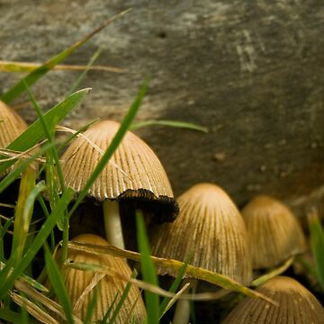 Annual Secret Society for Mushrooms by SteveWilliams