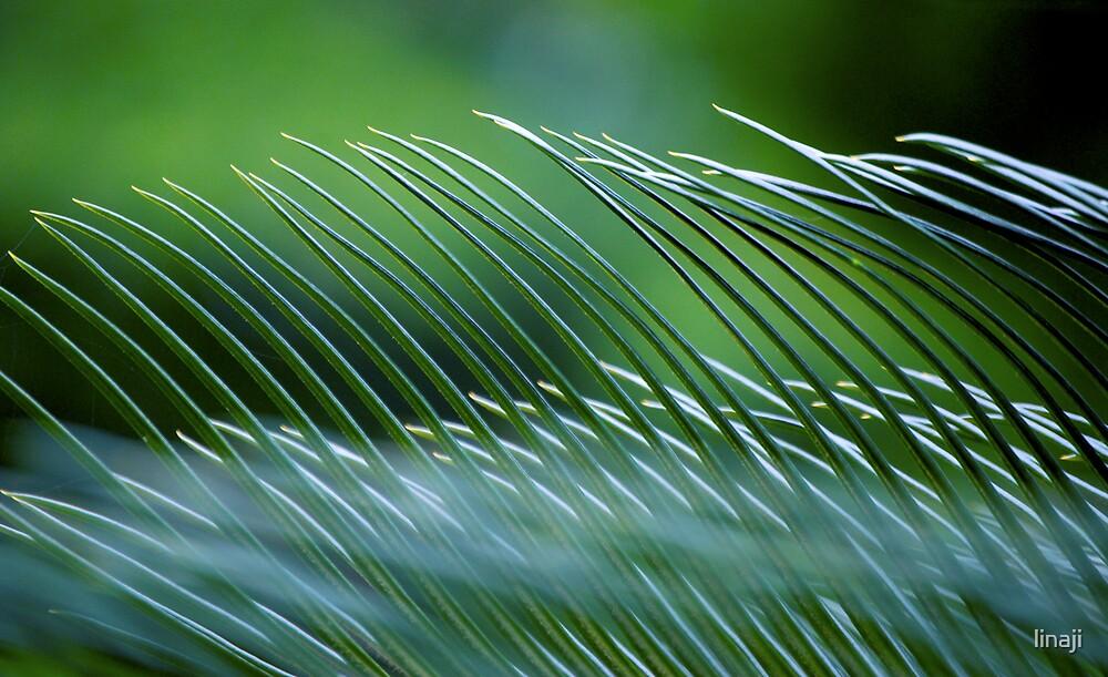 Slight Shift Paradigm... Kauai Sensual Series by linaji