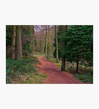 Walk Through The Trees Photographic Print
