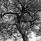 Looking Up by Eileen McVey
