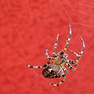 Spider in red by Hans Bax