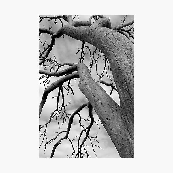 remnant tree Photographic Print