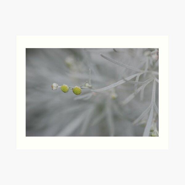 Artemisia blossom Art Print