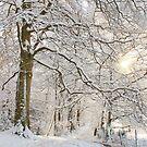 Winter Woodland Path by Alyson Fennell