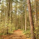 Kinver Pine Woods by Alyson Fennell